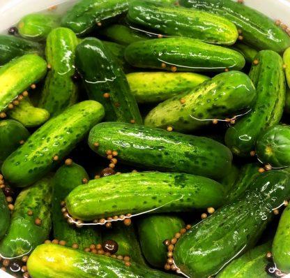 Whole Half Sour Pickles